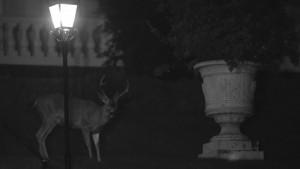 """""""Half-moon"""", 2012,vidéo, 8'59''"""