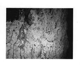 """Quelques """"photo-graphies"""" de la série La préhistoire, montrées à Lectoure ( ours, cerf, lionne, cerf)."""